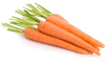 Carrot vegetable group on white background
